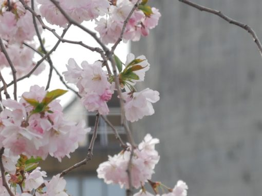 FRÜHLING | signs of spring
