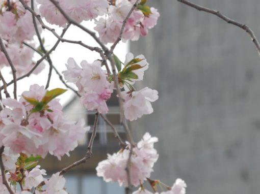 BERLIN | signs of spring