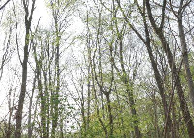 Tiergarten Spring