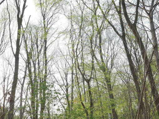 TIERGARTEN | spring blossoming