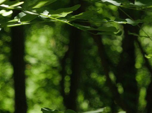 GRUNEWALD | spring forest bath