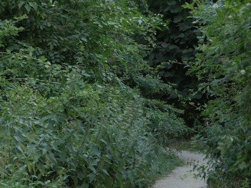 LEISE PARK | quiet park