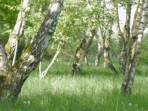 NATUR PARK SÜDGELÄNDE | nuture-nature