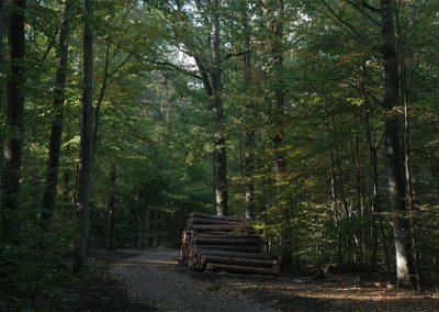 TEGEL FOREST BATH