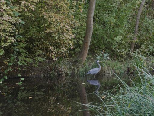 RUDOWER FLIESS | birds & bogs